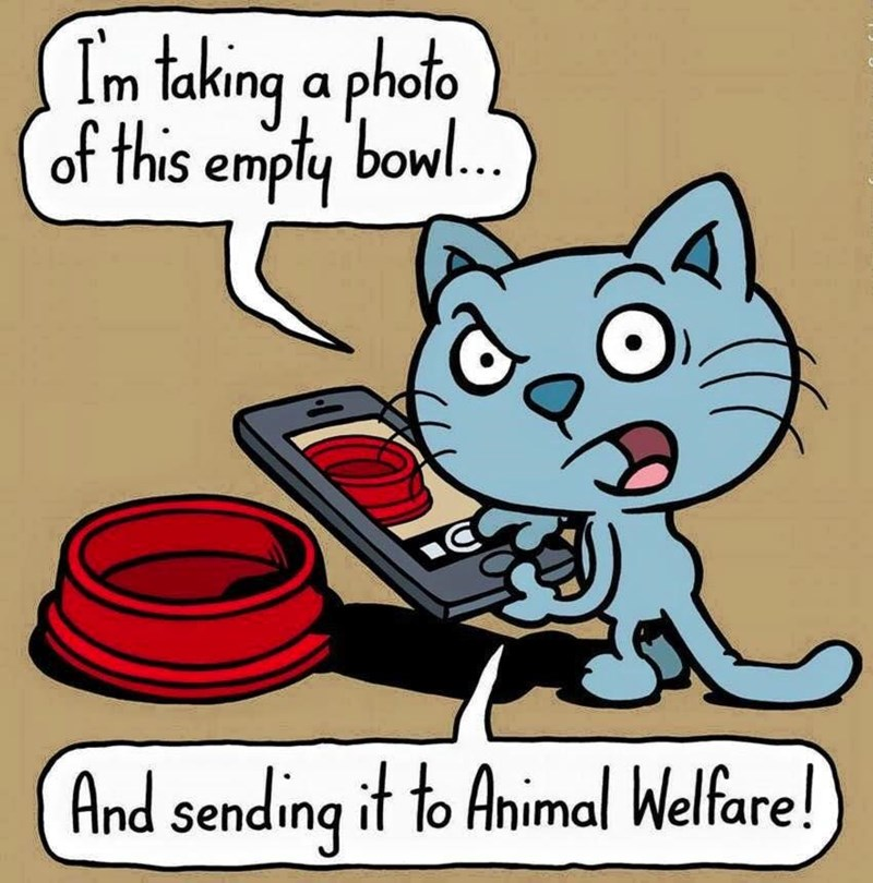 this is abuse cat web comic
