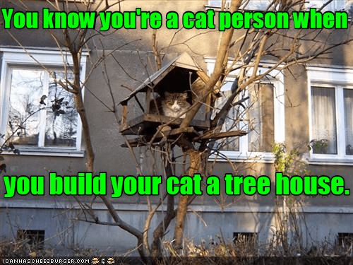 know cat person treehouse caption build when - 8987497984