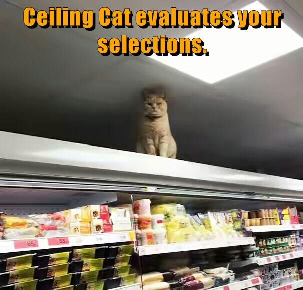 selections,ceiling cat,caption,evaluates