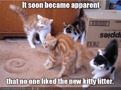 liked SOON nobody new apparent kitty caption litter