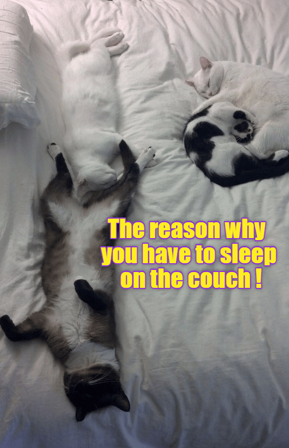 couch reason sleep caption why Cats - 8987528704