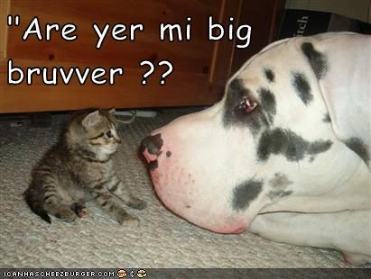 Cheezburger Image 8987553024
