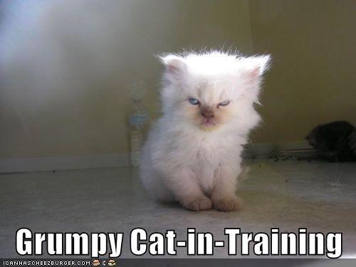 in Grumpy Cat training caption - 8987598592