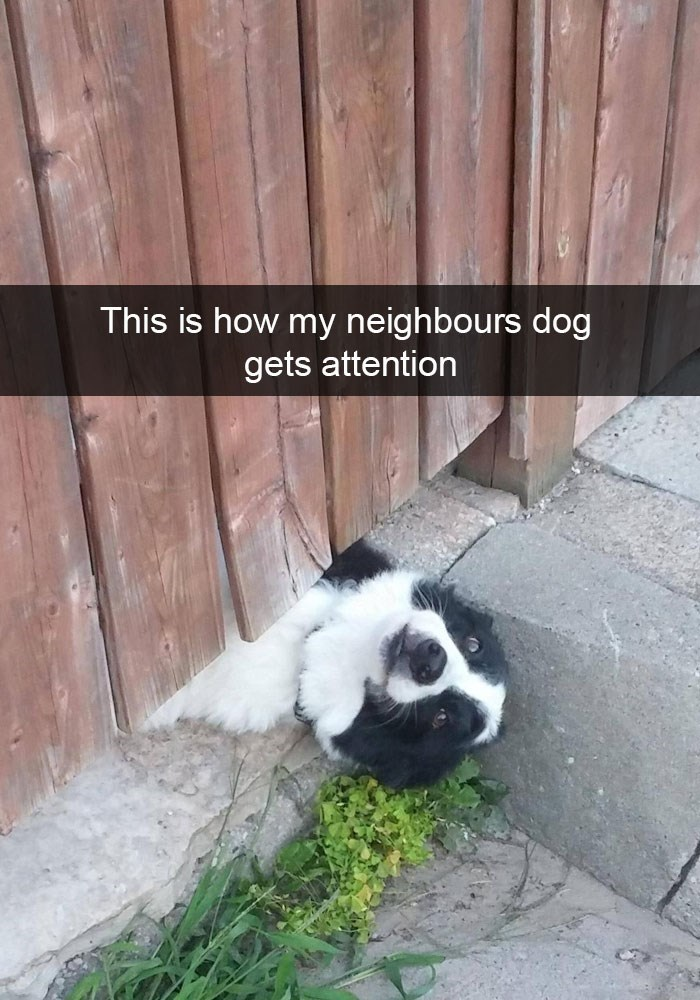 Snapchat dog in a funny picture of him peeking under the wooden fence.