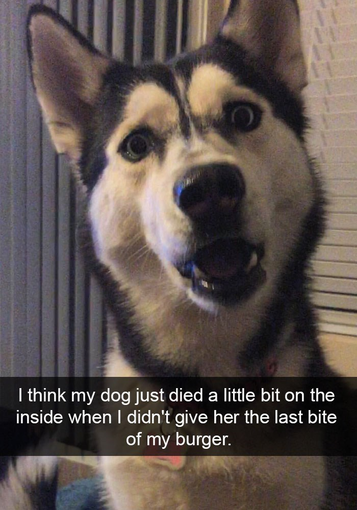 Funny picture of a dog on Snapchat that is shocked she didn't get the last bite of the burger.
