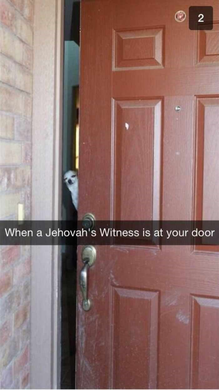 Funny meme from Snapchat of your dog answering the door when Jehovah's Witness's knock.