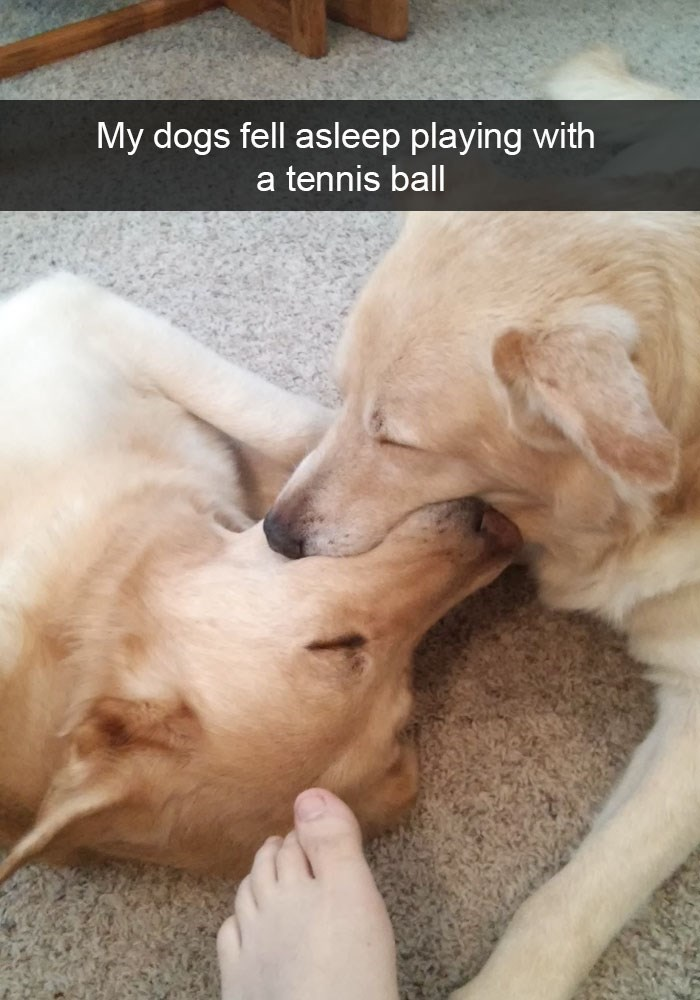 Funny dogs fell asleep with a tennis ball in their mouth as shown on Snapchat.