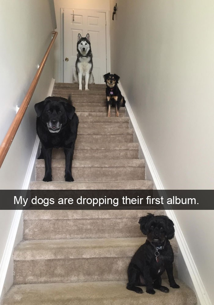 Funny picture of 4 dogs on Snapchat that look like they are about to drop their first album.