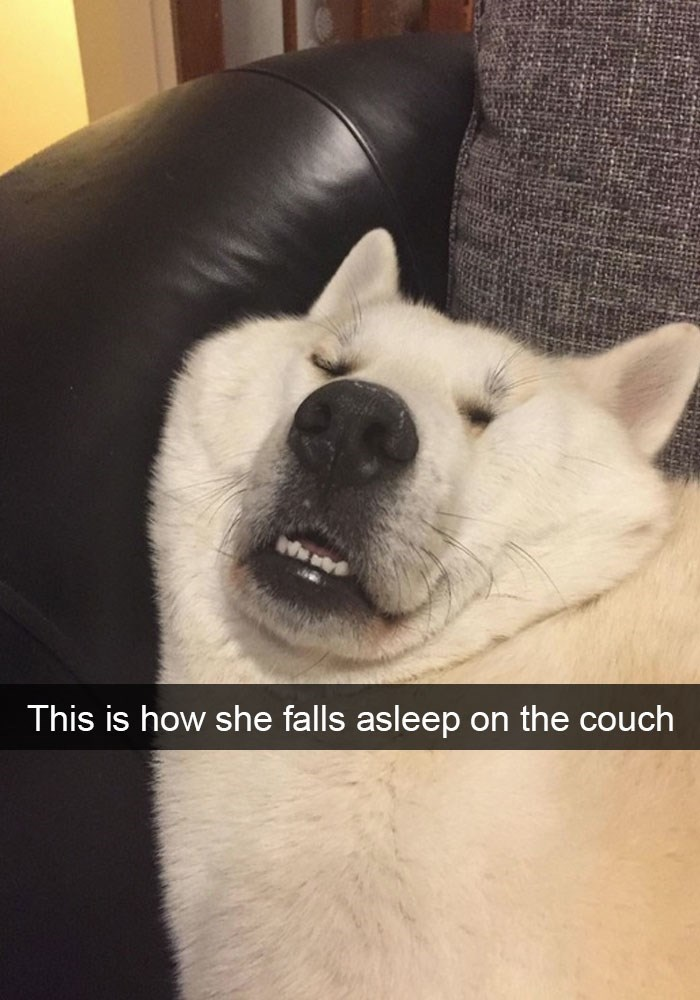 Funny Snapchat of a dog that fell asleep in a funny way on the couch.