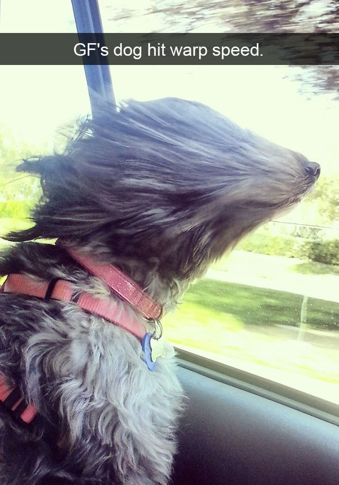 Snapchat funny picture of a dog with his head out the window, traveling at close to warp speed.