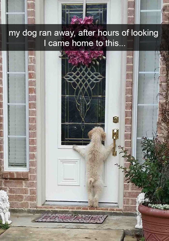 Funny picture on Snapchat of a dog that run away and was found like this when owners returned home.