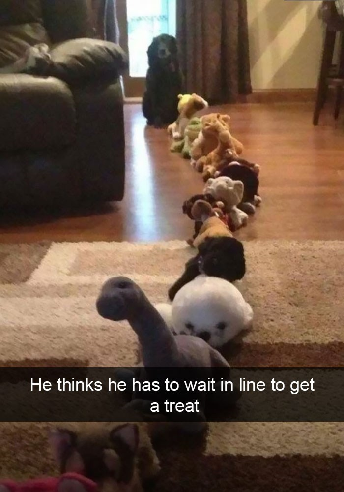 Snapchat funny picture of a dog waiting in line to get a treat, but it is all just stuffed animals.