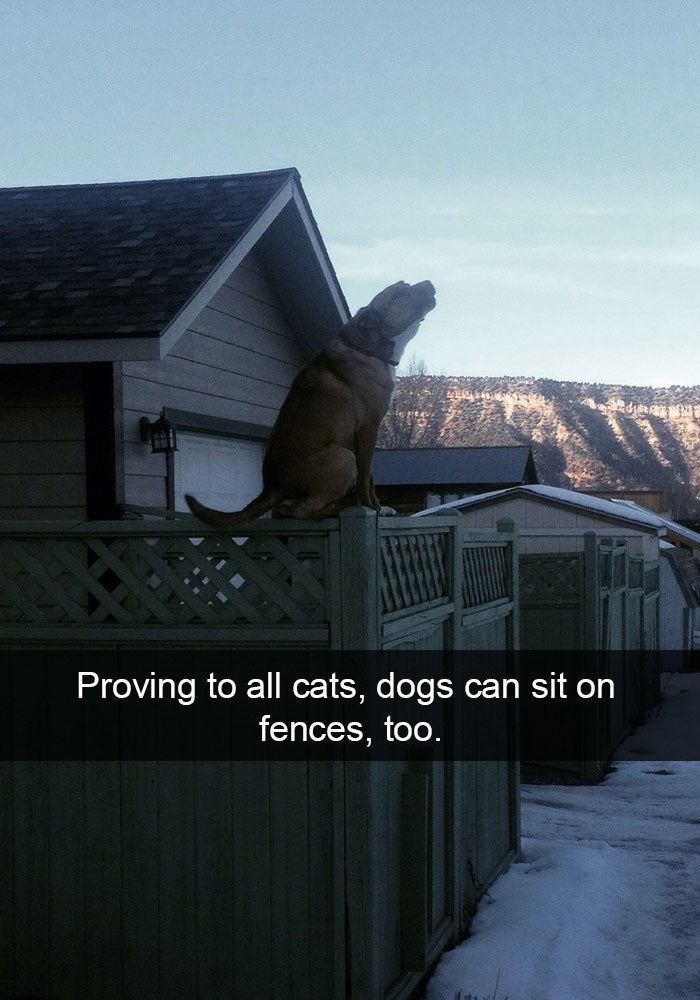 Funny picture of a dog on Snapchat that is trying to prove to all the cats that he too can sit on the fence.