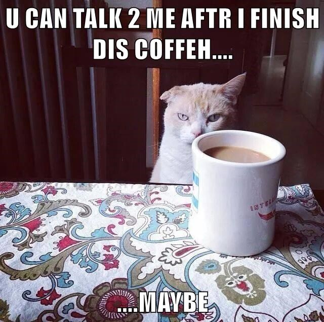 cat after talk finish maybe coffee caption - 8987688960