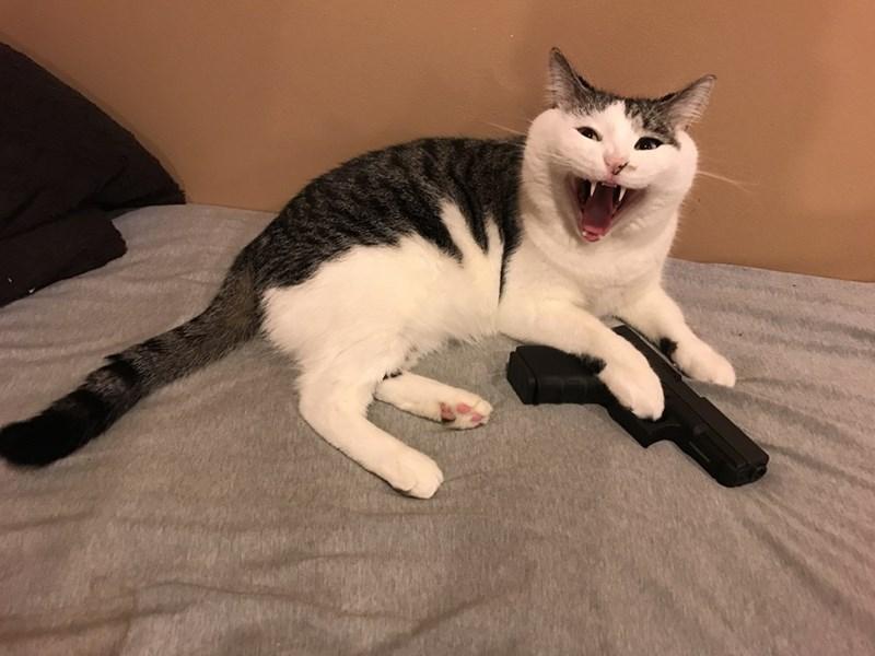 guns,Cats