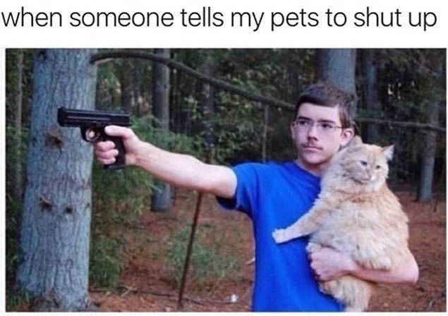 twitter,pets,Cats