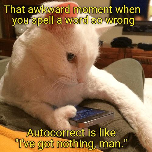 autocorrect cat memes stupid - 8987865088