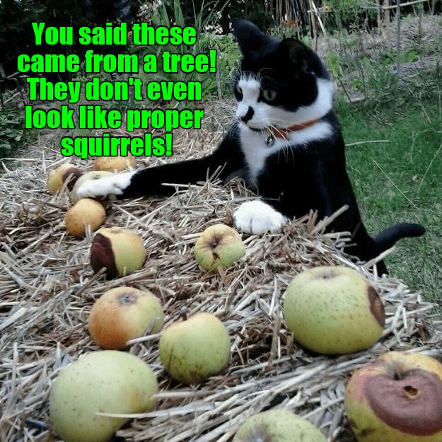 cat said squirrels look came dont tree proper caption - 8987994368