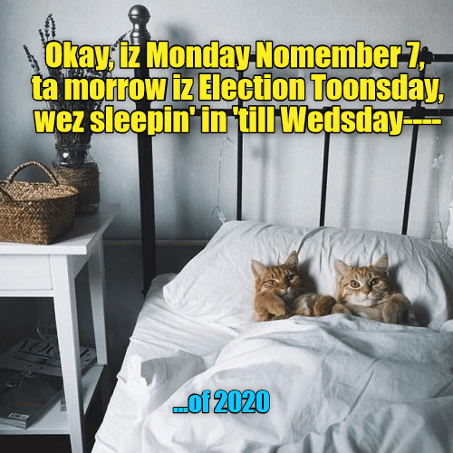 sleeping in election 2016 caption Cats - 8988162304