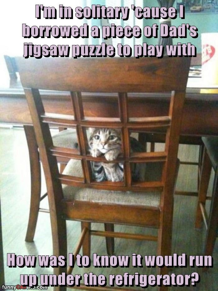 cat solitary puzzle jigsaw refrigerator - 8988166912