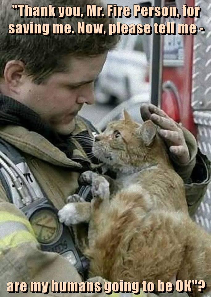cat fireman thank you humans mr ok caption are - 8988173568