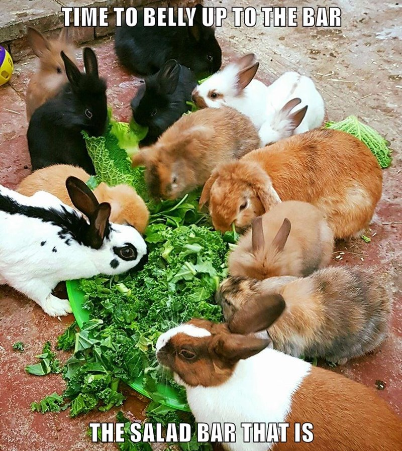 bar caption bunny rabbits salad - 8988204288