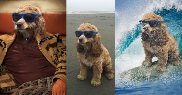cool,dogs,beach,photoshop battle,chill