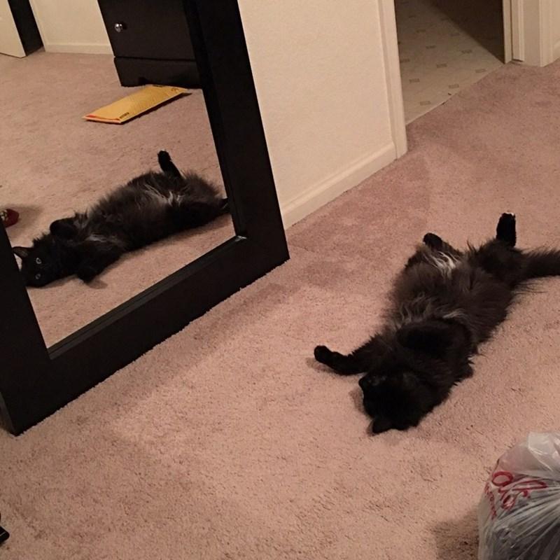 mirror vain Cats - 8988250624
