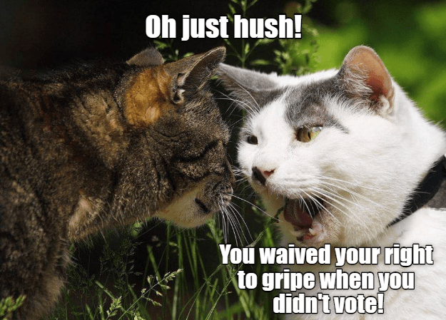 right vote waived just didnt gripe hush Cats - 8988440576