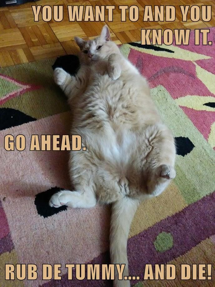 YOU WANT TO AND YOU KNOW IT. GO AHEAD. RUB DE TUMMY.... AND DIE!
