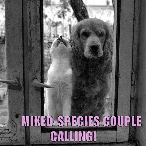 MIXED-SPECIES COUPLE CALLING!