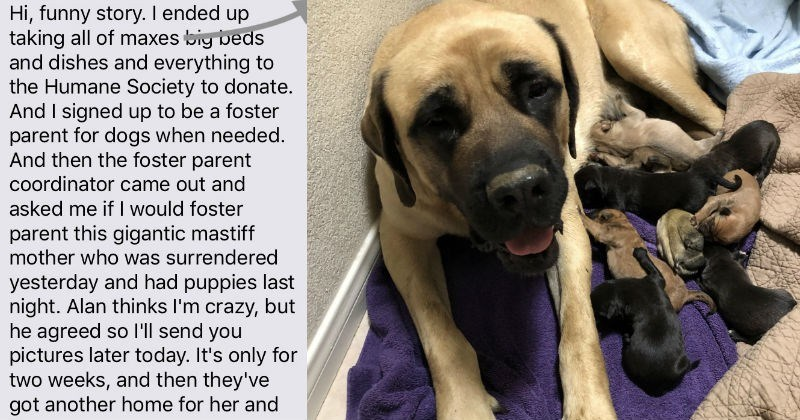 Nice mom spontaneously decides to adopt a gigantic mastiff and her puppies.