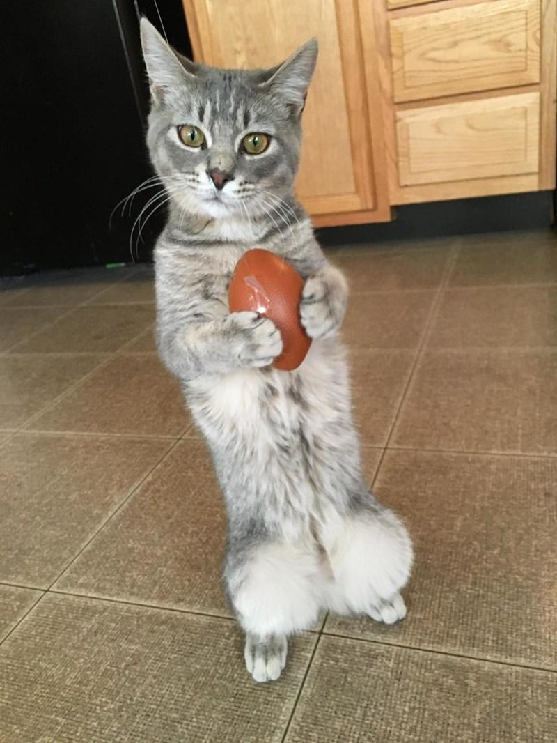 football Cats - 8988764928