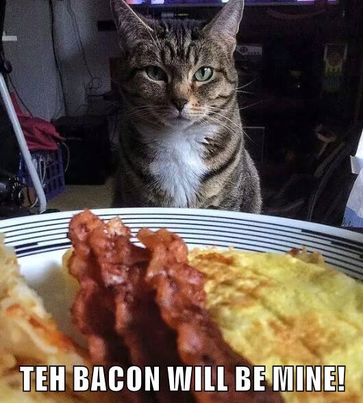 cat mine be will caption bacon - 8988790016