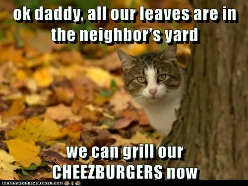 Cheezburger Image 8988815104