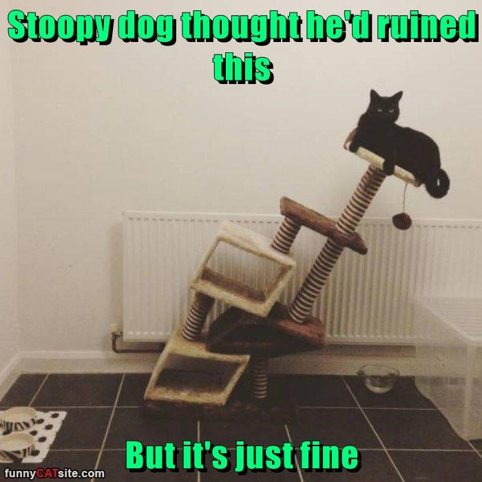 stoopy cat dogs fine thought ruined caption - 8988918528