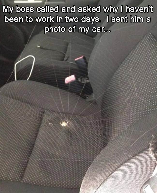 funny fail image spider builds web right on driver seat of car