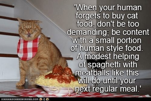 Wise words from an old cat