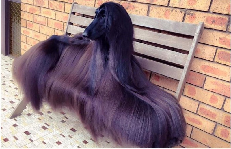 hair dogs goals - 8989161472