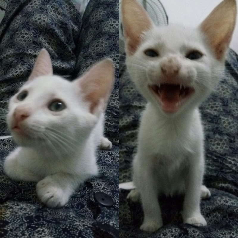 kitten - 8989212160