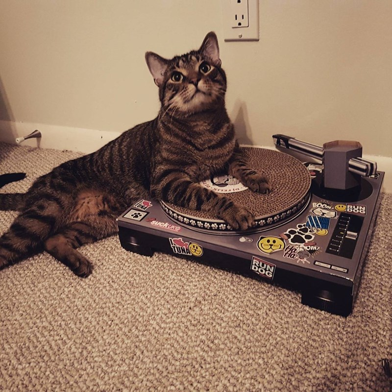 dj Cats whiskers - 8989220352