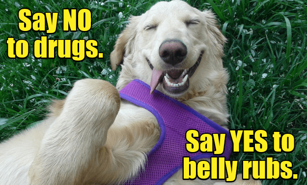 Rub My Belly And I'm Your Friend Forever