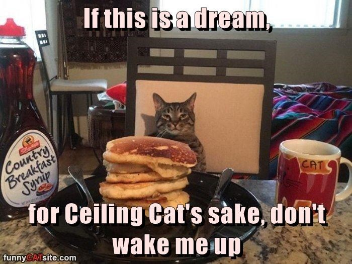 cat dream if wake up me dont caption
