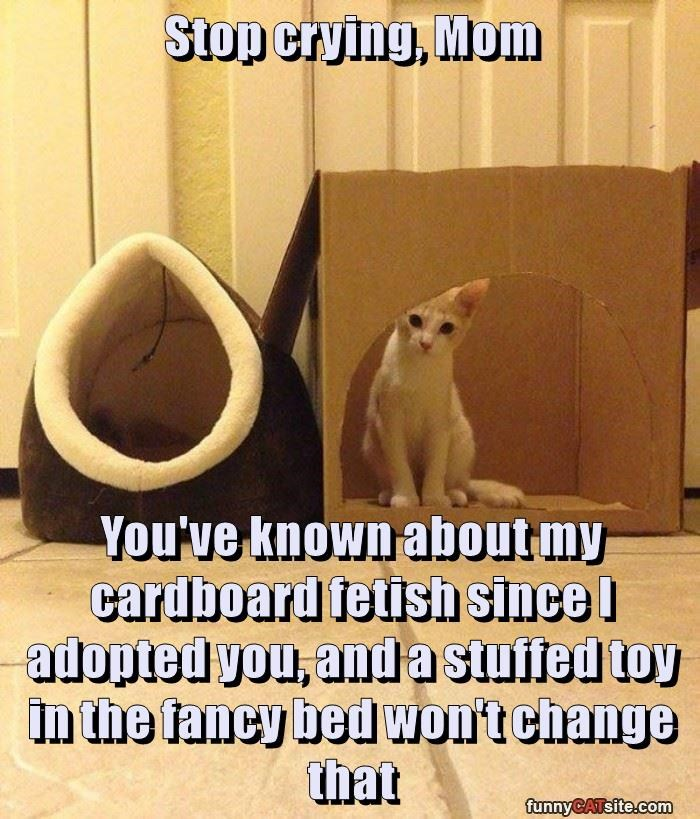 Stop crying, Mom  You've known about my cardboard fetish since I adopted you, and a stuffed toy in the fancy bed won't change that