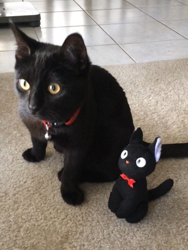 lookalike toys Cats - 8989664768