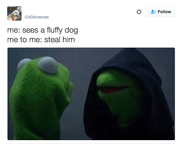 Green - Follow @404memes me: sees a fluffy dog me to me: steal him