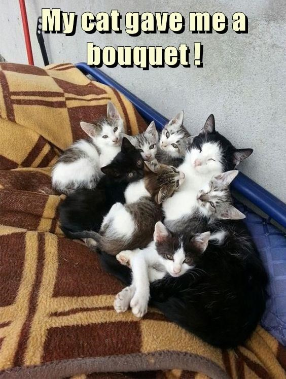 cat bouquet caption gave - 8989850112