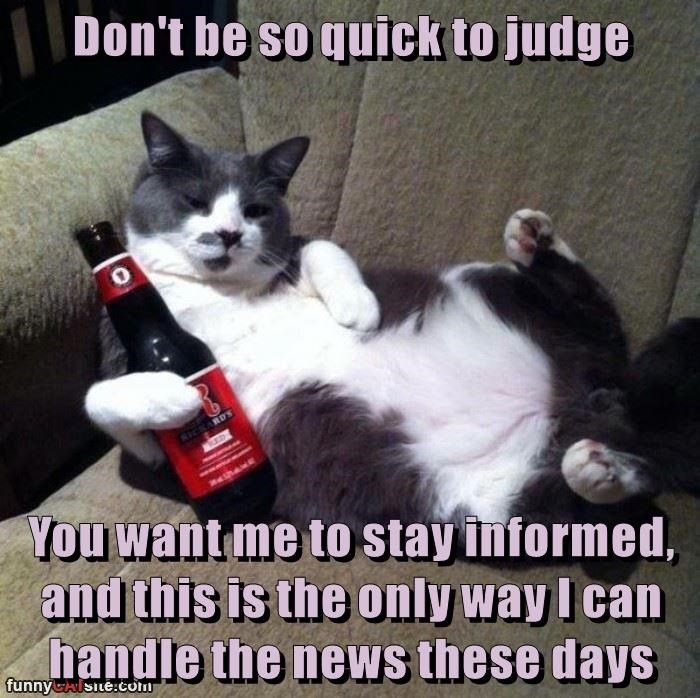 news couch cat memes - 8990004736