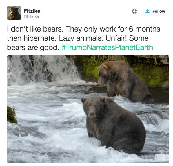 Brown bear - Fitzlke Follow @Fitzlke I don't like bears. They only work for 6 months then hibernate. Lazy animals. Unfair! Some bears are good. #TrumpNarratesPlanetEarth