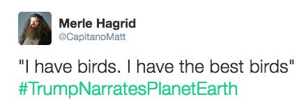 "Text - Merle Hagrid @CapitanoMatt ""I have birds. I have the best birds"" #TrumpNarrates Planet Earth"